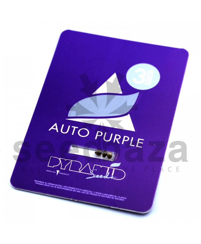 Auto Purple Feminised
